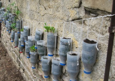 Vertical wallplanting using plastic milk bottles