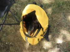 Maggie commandeering the day pack to rest in. Read more about Maggie