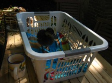 Maggie in her playpen. Read more about Maggie