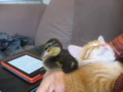 Maggie reading whilst Gigi sleeps. Read more about Maggie