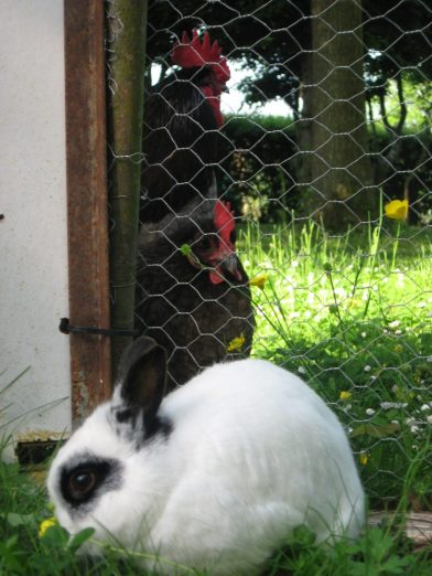 Pumpjack and Gertrude want to come in and play with Hobbs. Read more about our animals