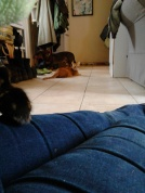 Chewie (dog), Gigi (cat) and one of the ducklings. Read more about our animals