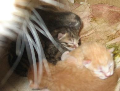 Kittens snuggled in