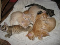 A mound of kittens